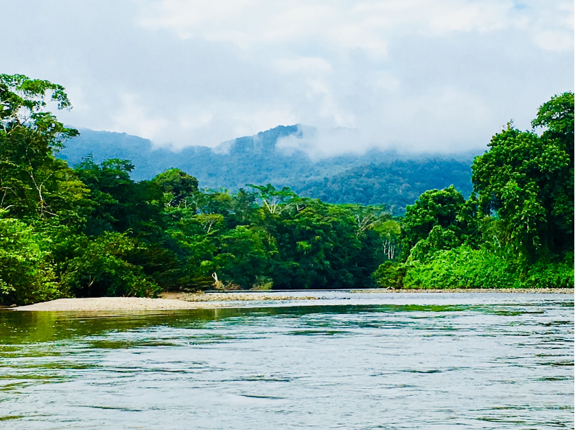 The Mangozisa with the Ancient forests of the Shaimi mounatins in the background. Photo by Adam Gebb